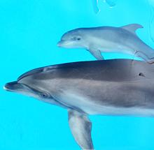 Дельфиненка назвали Гермес