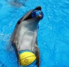 В Харькове проходят занятия по дельфинотерапии для детей-переселенцев