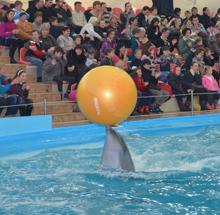 Святой Николай поздравил особенных детей в Харьковском дельфинарии НЕМО