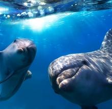 Дельфины обладают уникальным слухом