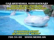 Новое шоу белого кита! Харьковский дельфинарий